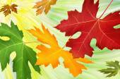 Fall — Stock Photo