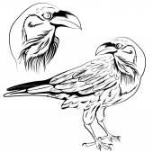 Raven vector — Stock Vector