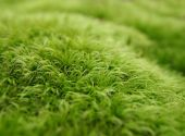 Green Moss Macro Background — Stock Photo