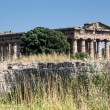 Ruins of ancient greek city Paestum — Stock Photo #58464337