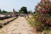Ruins of ancient greek city Paestum — Stock Photo