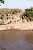 Gnu migration — Stock Photo