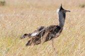 Dans le Masai Mara — Photo