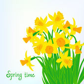 Spring card background with daffodils — Stock Vector