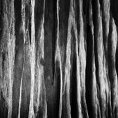 Abstract of the wood — Stock Photo