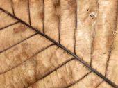 Mönster på bladen skrumpnade — Stockfoto