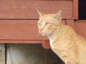 Portrait of brown cat — Stock Photo