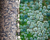 Cobbled Road and Green Plants in San Giorgio Fortress in Lisbon, — Stock Photo