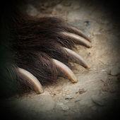 Brown bear jaws — Stock Photo