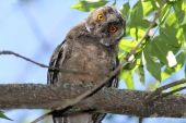 Funny owl on branch — Stock Photo