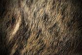 Beautiful texture of wild boar fur — Stock Photo