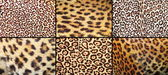 Collection of leopard pelt textures — Stock Photo