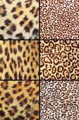 Collection of different leopard pelts — Stock Photo