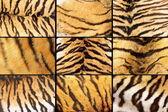Collection of tiger fur closeups — Stock Photo