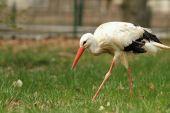 White stork at the zoo — Stock Photo