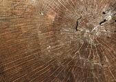 Раздел на старый деревянный ствол — Стоковое фото