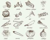 Vegetables vector hand drawn — Vettoriale Stock