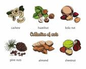 Six kinds of nuts — Stock Vector