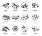 Twelve kinds of nuts — Stock Vector