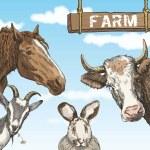 Rural animals — Stock Vector #68021691