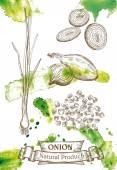 Green onion — Stock Vector