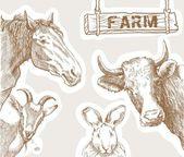 Rural animals — Stock Vector