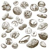 Nut set — Stock Vector