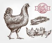 Poultry breeding — Stock Vector