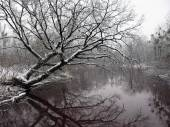 Winter tree on the river — Stock fotografie