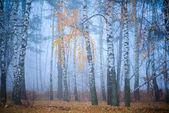 лес в тумане — Стоковое фото