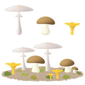Edible mushrooms — Wektor stockowy