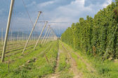 Hop yard and superstructure of overhead wires — Stock Photo