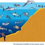 ������, ������: Ocean zones