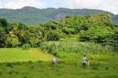 National Park Vinales — Stock Photo