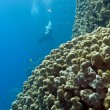 Coral reef with stony corals and divers at the bottom of tropical sea on blue water background — Stock Photo #51864017