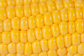 Background of yellow corn grains on the colb macro — Stock Photo