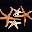Some of sea stars isolated on black background — Stock Photo #56117593