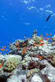Colorful coral reef with hard corals and exotic fishes at the bo — Stock Photo