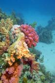 Colorful coral reef at the bottom of tropical sea - underwater — Stock Photo
