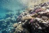 Coral reef under the surface of water in tropical sea,  underwater — Stock Photo
