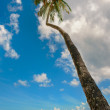 Tropical beach palm tree Trinidad and Tobago Maracas Bay — Stock Photo #63348761