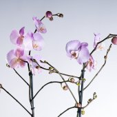 Orchid purple branches on the background (Orchidaceae) — Stock Photo