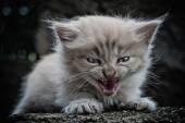 Het kleine kitten — Stockfoto