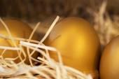 Golden egg in nest . Feel look lucky — Stock Photo