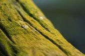 Forest Green moss DOF technic — Stock Photo