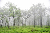 Wonderful forest in fog with green grass — Stock Photo