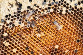 Honeycomb with working bee in sunlight — Foto Stock