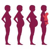 Vector pregnancy stages, — Stock Vector