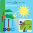 Photosynthesis process — Stock Vector #66059971