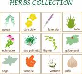 Herbs collection — Stock Vector